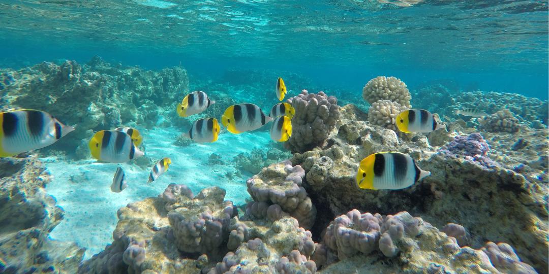 The Moorings Tahiti Fish