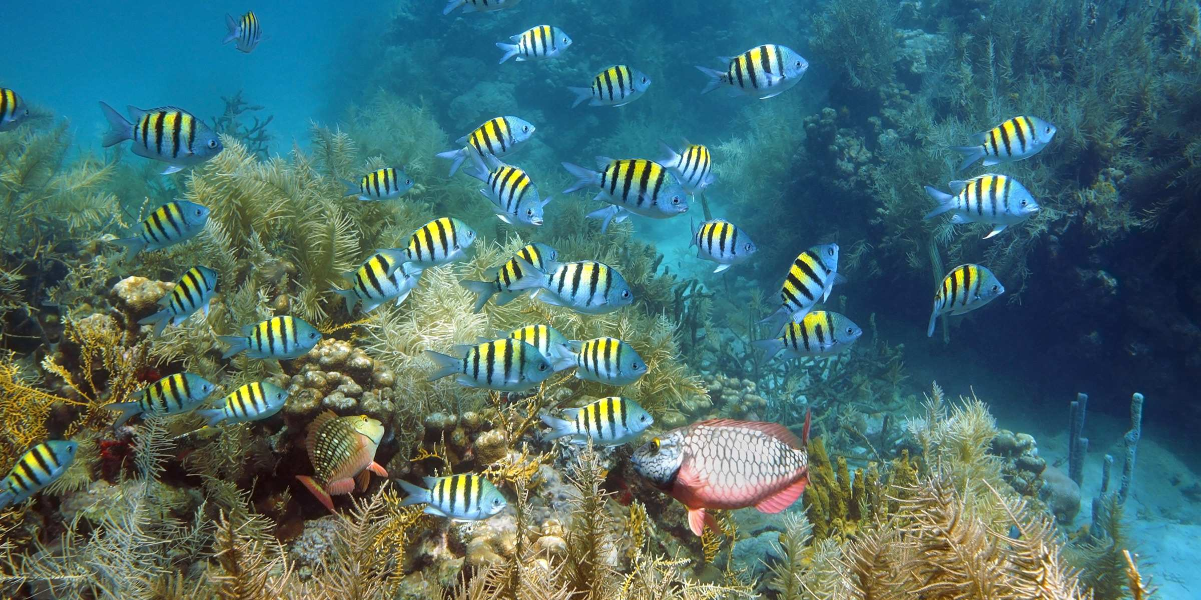 us_tm_3993_0119_blog-diving-martinique-j